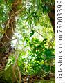 정글처럼 다양한 식물이 북적 거리는 숲의 모습 75003399