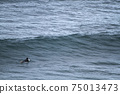 A surfer lying on his surfboard paddles over an approaching wave on a beach in Portugal on the Atlantic Ocean 75013473