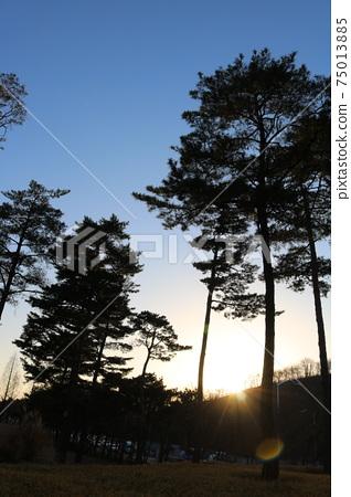 소나무 75013885