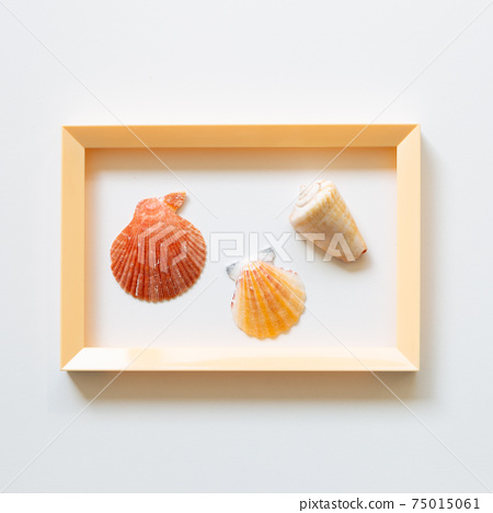 Shellfish on white background. summer marine decoration. flat lay, top view, copy space 75015061