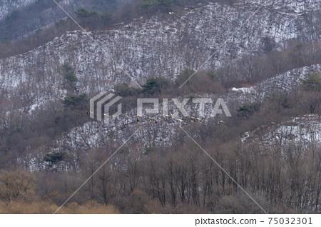 재두루미,철원군,강원도 75032301