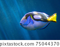 水下藍塘觀賞魚熱帶魚 75044370
