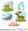 Animals of Iceland in flat modern style design 75046167