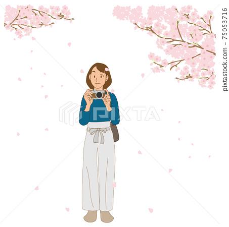 벚꽃을 촬영하는 카메라 여자 75053716