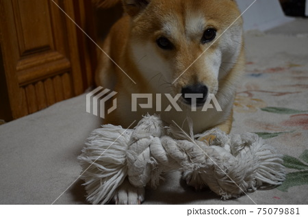 Playing with the rope 3 75079881