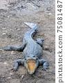 鱷魚張開嘴 75081487