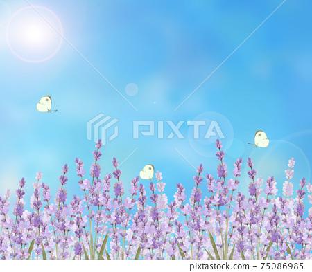 薰衣草和蝴蝶景觀 75086985
