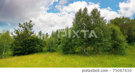 trees on the hill in summer scenery. beautiful mountain landscape on a cloudy day 75087810