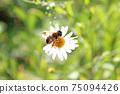 바로 위에서 업에 찍힌 흰색 작은 꽃과 거기에 머물러있는 꿀벌 75094426