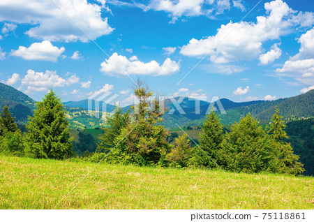 rural landscape in carpathian mountains. summer nature scenery with trees on the meadow. fluffy clouds on the bright blue sky. beautiful view in to the distant hills and valley 75118861