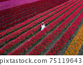 Beautiful girl in white dress travel at Celosia flowers fields, Chiang Mai. 75119643
