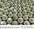 fresh cactus in pot. Cactus plant pattern 75120341