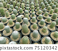 fresh cactus in pot. Cactus plant pattern 75120342