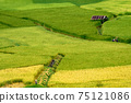 The scenery of the golden terraced rice field at Pua in Nan province, Thailand. 75121086