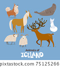 Animals of Iceland in flat modern style design. 75125266