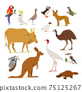 Big set of birds and animals of Australia 75125267