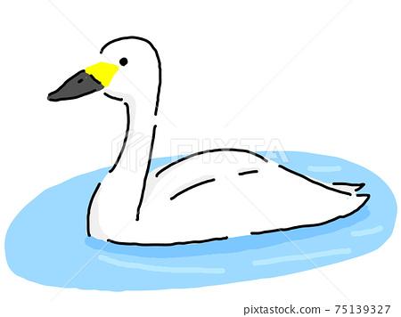 天鵝游泳 75139327
