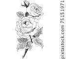 植物插圖玫瑰 75151971