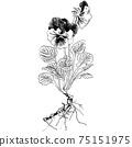 植物插圖-紫羅蘭 75151975