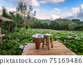 The beautiful scenery of the Hydrangea flower field with a lone chair and flower basket at Khun Pae. 75169486