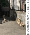 Stray cats relaxing in the back alleys of downtown 75181941