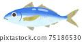 藍魚_竹莢魚 75186530