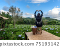 The scenery of a happy tourist in a hydrangea flower field at Khun Pae, Chiang Mai, Thailand. 75193142