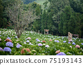 The beautiful scenery of the Hydrangea flower field at Khun Pae, Chiang Mai, Thailand. 75193143