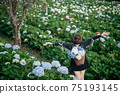 The scenery of a happy tourist in a hydrangea flower field at Khun Pae, Chiang Mai, Thailand. 75193145
