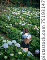 The scenery of a happy tourist in a hydrangea flower field at Khun Pae, Chiang Mai, Thailand. 75193147