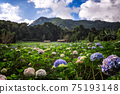 The beautiful scenery of the Hydrangea flower field at Khun Pae, Chiang Mai, Thailand. 75193148
