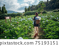The scenery of a happy tourist in a hydrangea flower field at Khun Pae, Chiang Mai, Thailand. 75193151