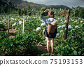 The scenery of a happy tourist in a hydrangea flower field at Khun Pae, Chiang Mai, Thailand. 75193153