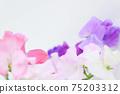 핑크와 보라색의 예쁜 딸 75203312