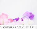 핑크와 보라색의 예쁜 딸 75203313