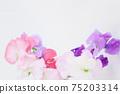 핑크와 보라색의 예쁜 딸 75203314