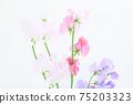 핑크와 보라색의 예쁜 딸 75203323