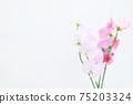 핑크와 보라색의 예쁜 딸 75203324