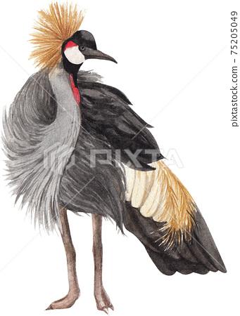 Black crowned crane element watercolor 75205049