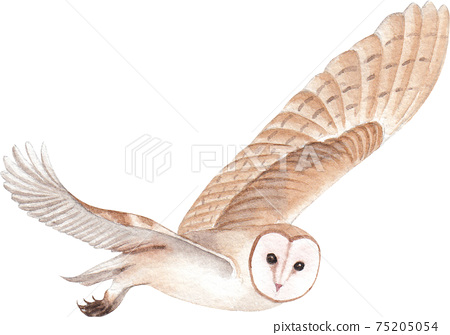 Owl element watercolor 75205054