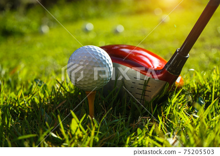 Golf club and ball on tee in grass. Golf balls on the golf course with golf clubs ready for the first short. In the morning, with the beautiful light. Sports that people around the world play in the 75205503