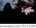 공간 벚꽃 75213289
