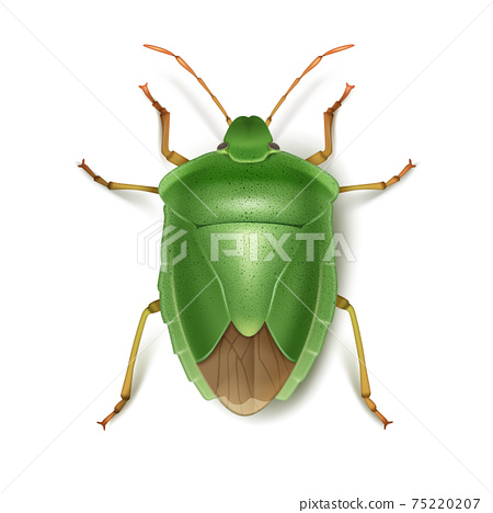 Green stink bug 75220207