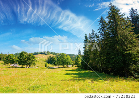 fir forest on the green grassy meadow. beautiful mountain landscape in summertime. good sunny weather with fluffy clouds on the sky at noon. carpathian countryside in mid summer 75238223