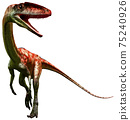 Coelophysis 3D illustration	 75240926
