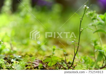 초봄의 비 개인 정원 1 75254913