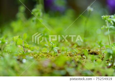 초봄의 비 개인 정원 6 75254919