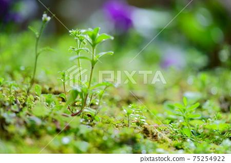초봄의 비 개인 정원 9 75254922