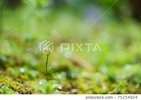 초봄의 비 개인 정원 11 75254924