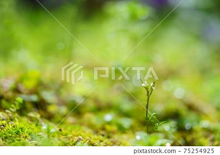 초봄의 비 개인 정원 12 75254925